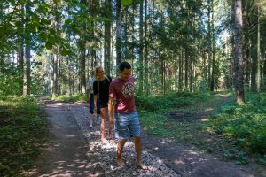 Nature walk in Tukums forest in Latvia