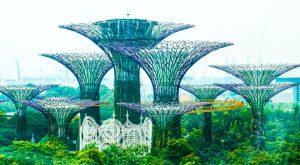 Super Trees Marina Bay Park Singapore