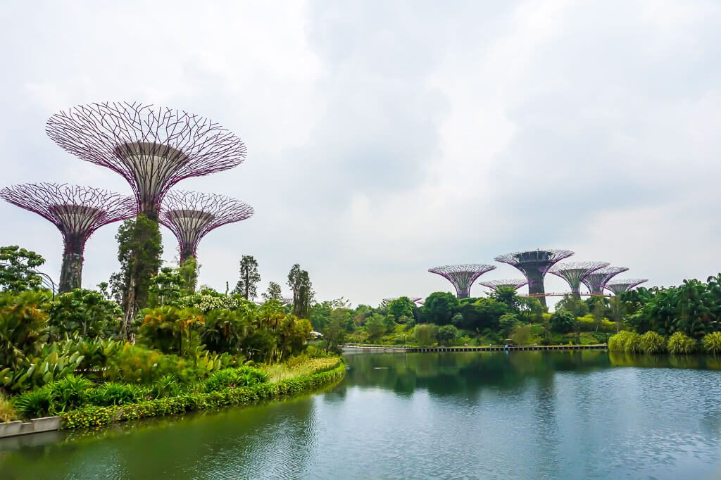 Super Trees at Marina Bay Park Singapore