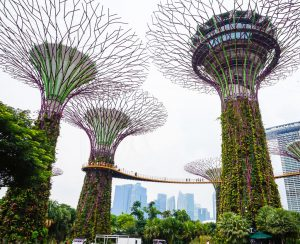 Super Trees in Singapore