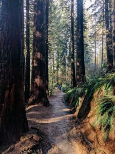 redwood grove washington park portland oregon