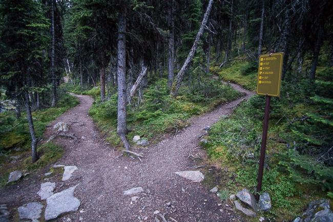Lake O'Hara West Opabin trail