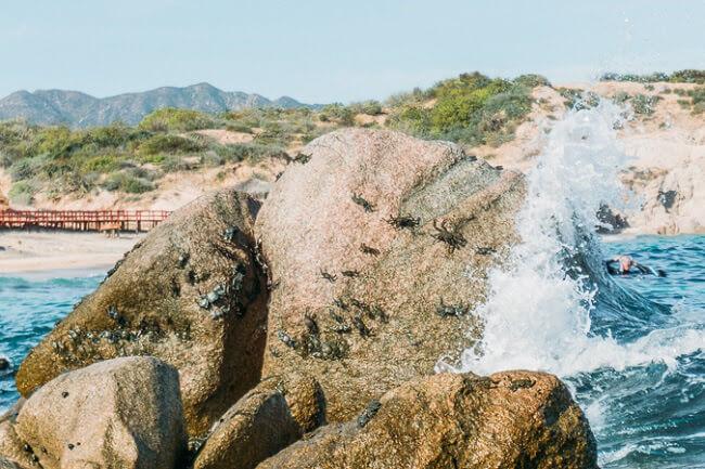cabo pulmo corral reef baja california mexico