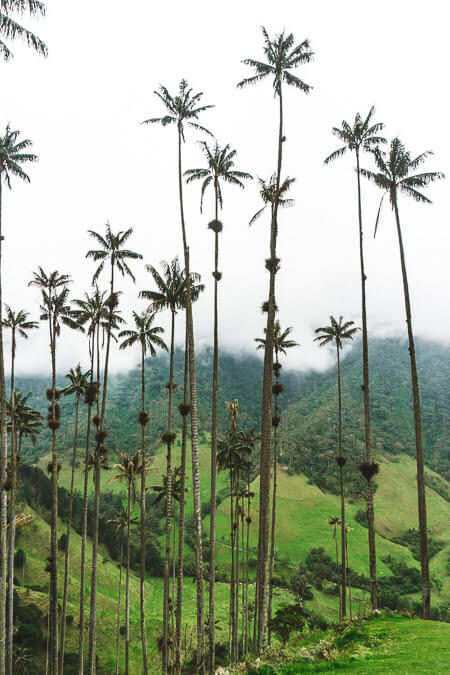 top things to do in valle de cocura salento colombia cocora valley