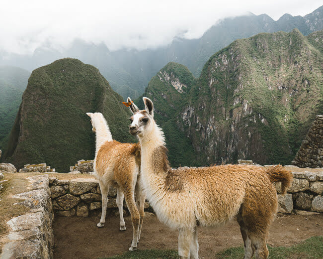 things to know before visiting Machu Picchu in Peru