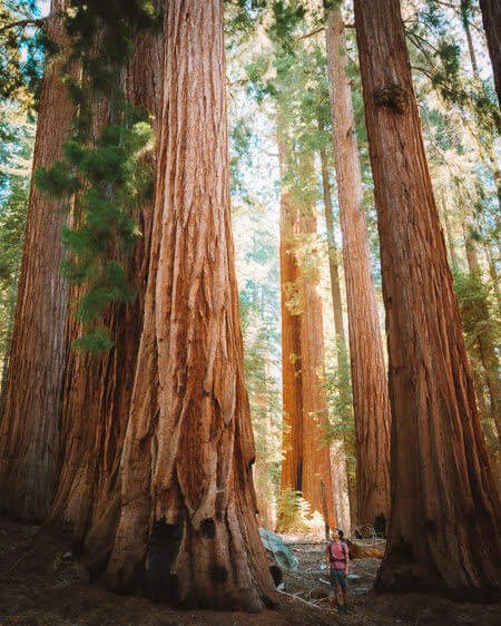 best day hikes to do kings canyon national park redwood creek loop