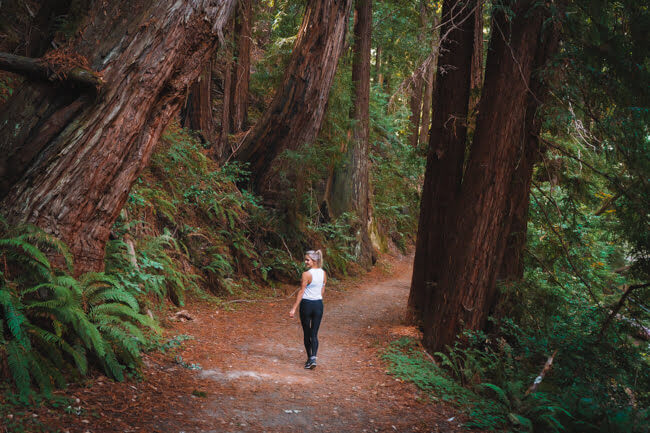 hiking skyline to the sea trail big basin redwoods state park