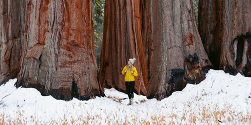 sequoia-national-park-winter